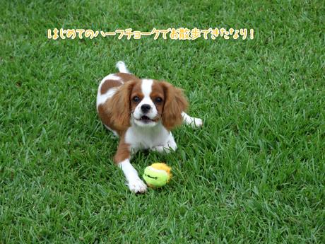 hanaのマイブームはボール遊び
