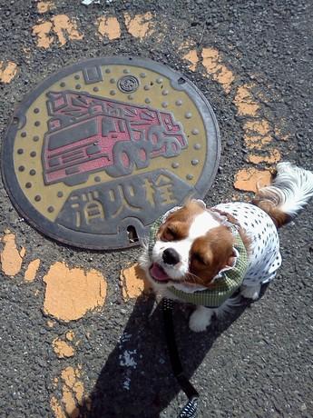 北本市消火栓マンホールのふた