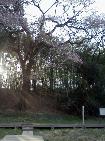 2015-03-22 16.12.32.jpg