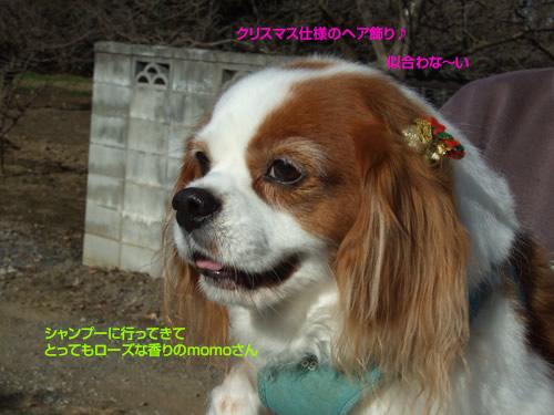 momo091221.jpg